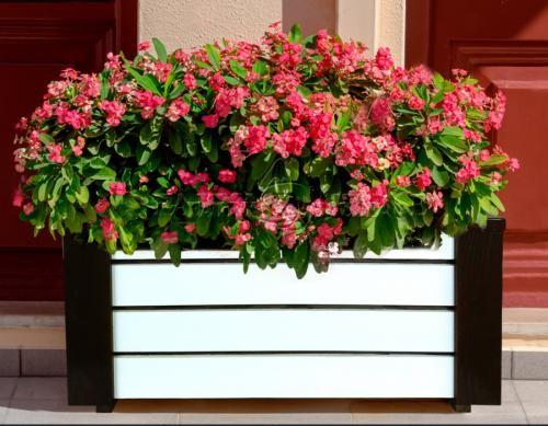 Дерев'яний ящик для рослин та квітів Амалія  Д83*Ш40*В35