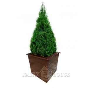 Дерев'яний вазон «Юка» фото 1