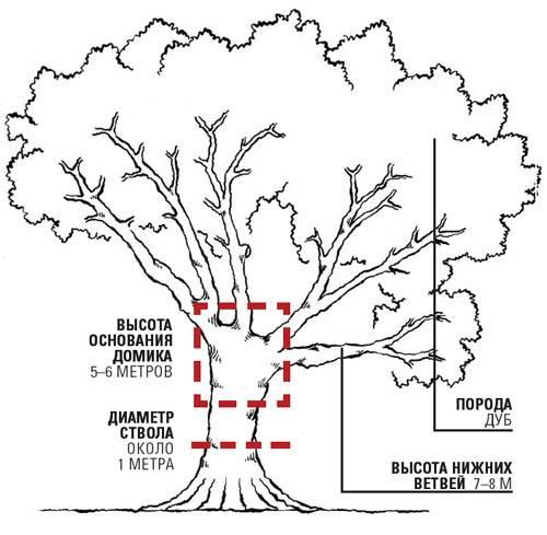 яке обрати дерево