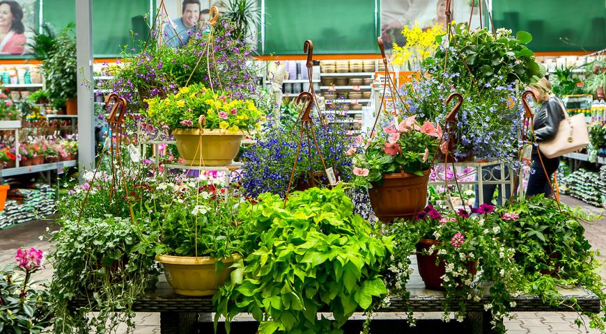 квітники та кашпо для квітів
